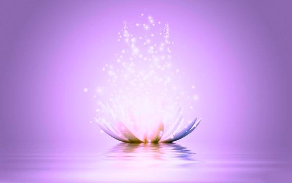 Beautiful-Lotus-Flowers
